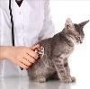 Ветеринарные клиники в Мужах